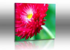 Fotoatelier Dirk Haas Premium Tableau Mural XXL Motif Fleurs Rouge Vert de la marque Fotoatelier-Dirk-Haas image 0 produit